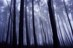 Bois de pin mystérieux Image libre de droits