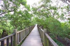 bois de promenade de Taiwan de nature image libre de droits