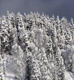 Bois de ressort dans une neige Photographie stock libre de droits