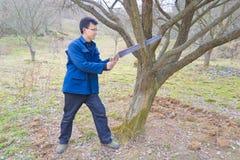 Bois de Sawing image stock