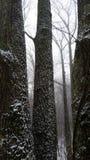 Bois de Tennesse avec la neige Photo stock