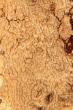 Bois de texture Photos stock