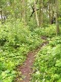 Bois de Torekov   Photo libre de droits