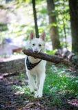 Bois de transport d'identifiez-vous de grand chien photos stock