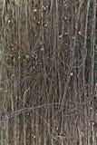 Bois de vigne dans la forêt humide. photos libres de droits