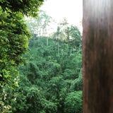 Bois de vue de jungle Photos stock