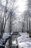Bois de Worsley en hiver Photographie stock
