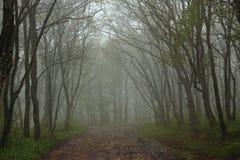 Bois dense sur l'île de Popov près de Vladivostok Photographie stock libre de droits