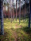 Bois du pin de Tuchola Regard artistique dans des couleurs vives de vintage Photos stock