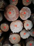 Bois du pin de Tuchola Regard artistique dans des couleurs vives de vintage Image libre de droits