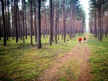 Bois du pin de Tuchola Regard artistique dans des couleurs vives de vintage Photos libres de droits