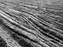 Bois du pin de Tuchola Regard artistique en noir et blanc Image stock