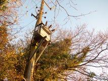bois en bois de poteau de boîte en métal de génération d'approvisionnement de courant électrique Photographie stock