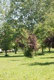 Bois en parc Photographie stock