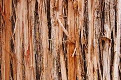 Bois endommagé Image libre de droits