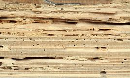 Bois endommagé par le ver de bois Photos libres de droits
