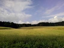 Bois et champs photographie stock libre de droits