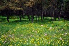 Bois et fleurs Photographie stock libre de droits