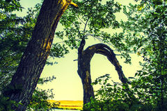 Bois et forêt Photo libre de droits