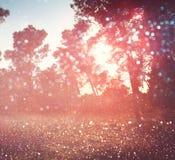 Bois et lumières rêveurs de bokeh de scintillement brouillés par résumé photos stock