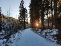 Bois et neige Images libres de droits