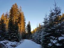 Bois et neige Image stock