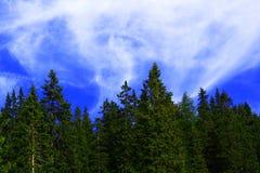 Bois et nuages Photographie stock