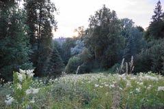 Bois fantastique peu commun tôt le matin Images libres de droits