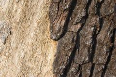 Bois foncé de lumière d'écorce Photographie stock