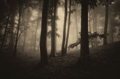 Bois foncés avec les arbres et le brouillard image stock
