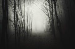 Bois foncés profonds avec le brouillard mystérieux la nuit photographie stock libre de droits