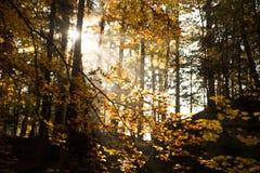 Bois/forêt Photo stock