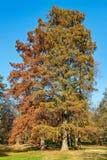 Bois gentil en parc en automne images libres de droits