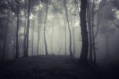 Bois hantés par obscurité avec le brouillard Images stock