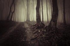 Bois hantés par obscurité Halloween Image stock