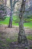 Bois inextricable au printemps image stock