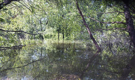 Bois inondés dans le Texas Image libre de droits