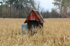 Bois jeté avec Tin Roof dans un domaine de maïs Images stock