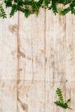 Bois léger de fond Planches en bois rugueuses Fond en bois décoré des branches vertes Jeunes pousses vertes sur un backg en bois Images libres de droits