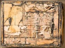 Bois mangé par des termites Photographie stock libre de droits