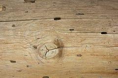 Bois modelé avec des trous de texture et de scarabée photo stock