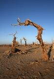 Bois mort Photographie stock libre de droits