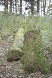 Bois mort dans la forêt d'hiver Photographie stock