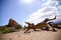 Bois mort dans le désert Photographie stock libre de droits