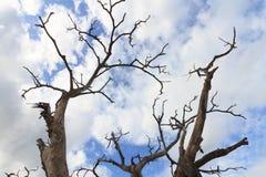 Bois mort en ciel bleu Photo libre de droits