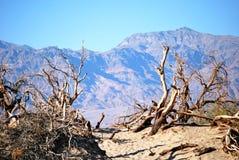 Bois mort et désert Image libre de droits