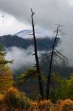 Bois mort, nuages et buissons jaunes. Photo stock