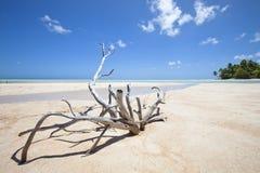 Bois mort sur la plage blanche de sable Images libres de droits