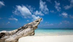 Bois mort sur la plage blanche de sable de l'île de paradis Photos libres de droits
