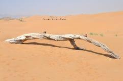 Bois mort sur le désert Images stock